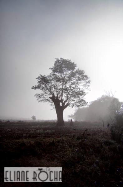 Kalaw - Burma - Morning Mist